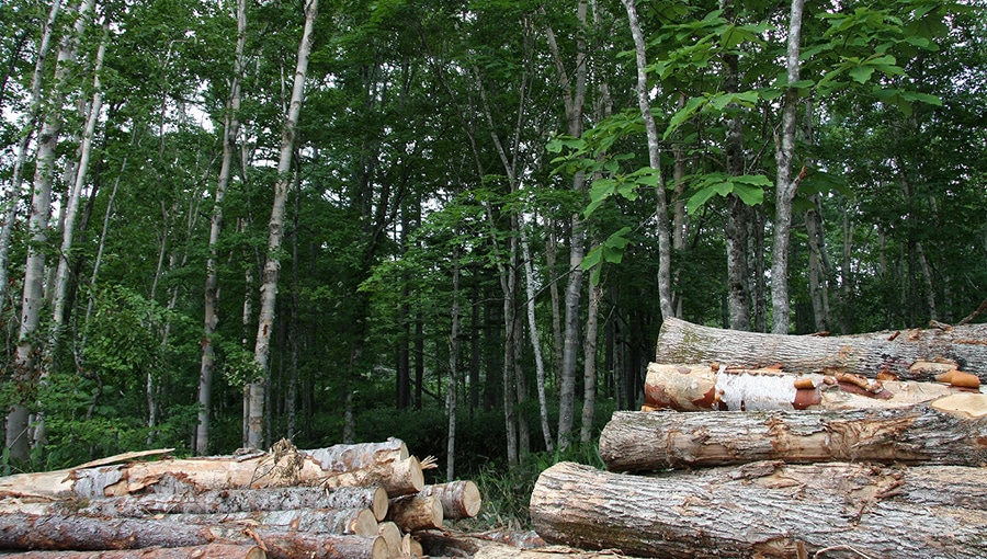 Beautiful timbers